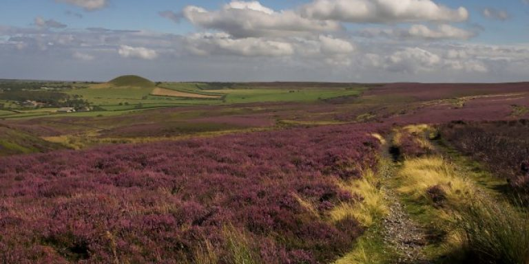 Picture of England's Yorkshire Moors.