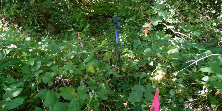 Picture of invasive plants